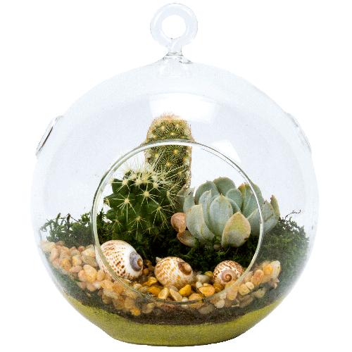 Cyma Orchids 5 Glass Globe Succulent Plant Terrarium